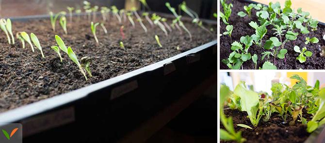 jardiner en ville vers l 39 autonomie alimentaire. Black Bedroom Furniture Sets. Home Design Ideas